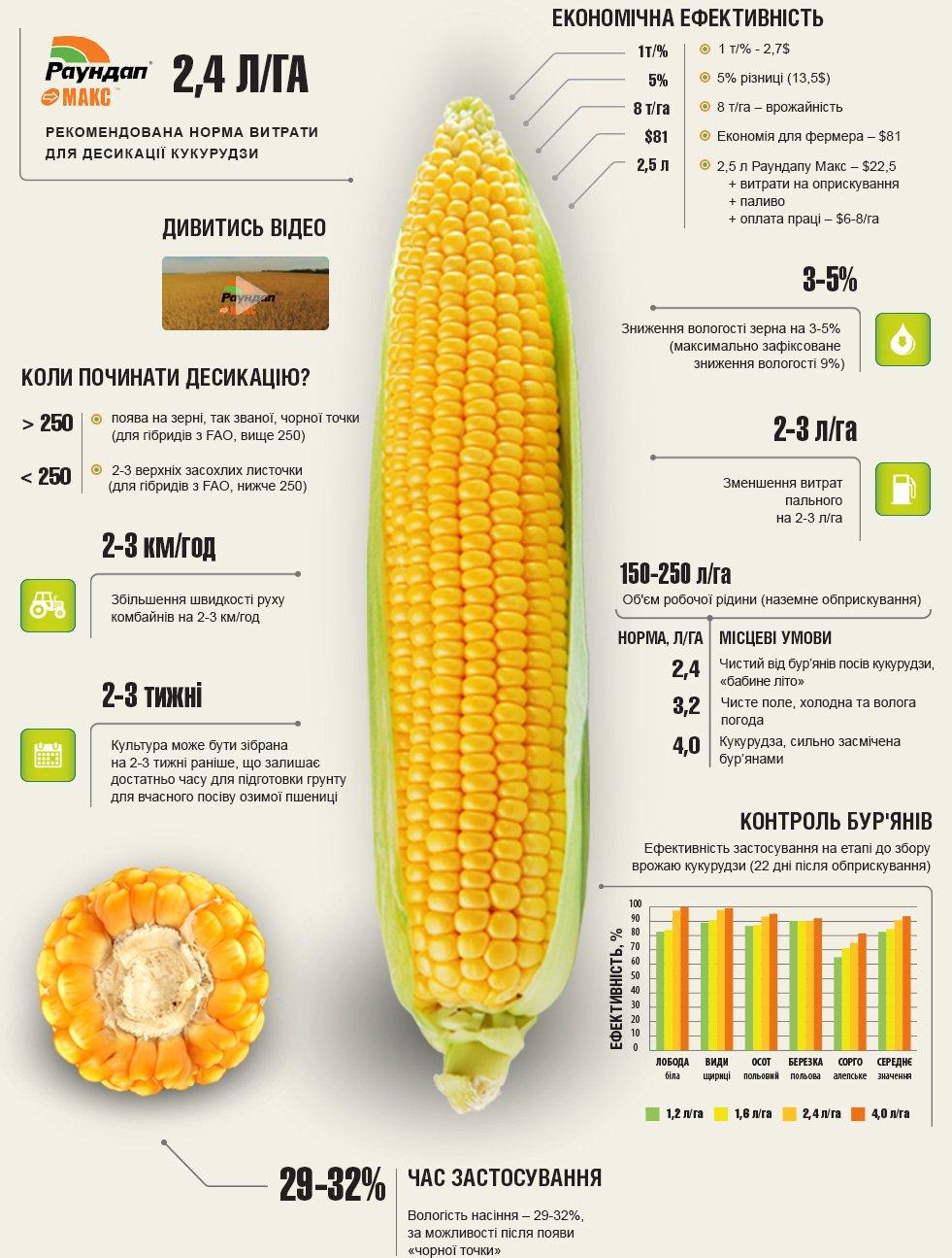 Десикація кукурудзи